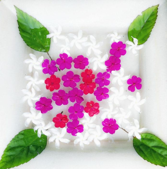 Decorative Flowers Bougainvillea Retreat Kandy
